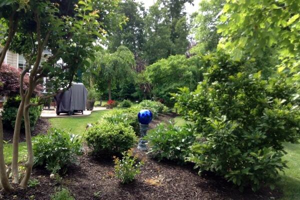 planting srubs